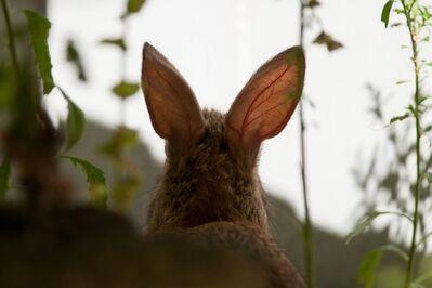 Susumu Kishihara, 'Rabbit Ears', 2013