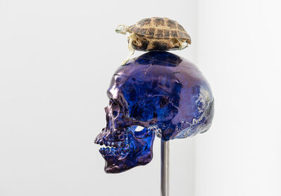 Jan Fabre, ' Skull with Turtle', 2017