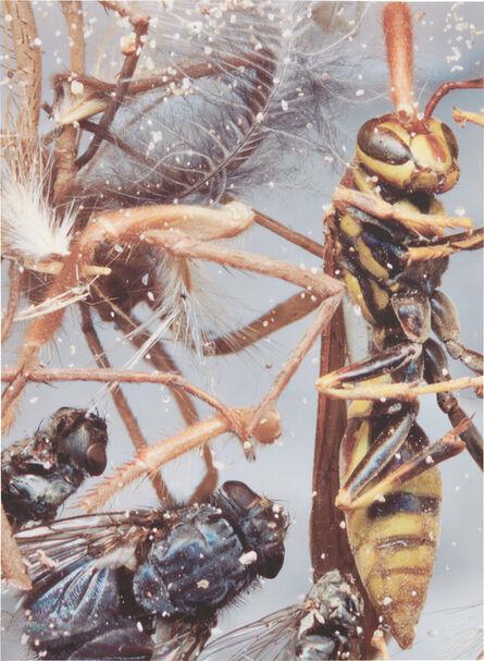 Cornelia Parker, 'Dust Breeding (on Judd)', 2001
