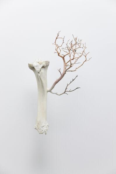 Myeongbeom Kim, 'Bone', 2013