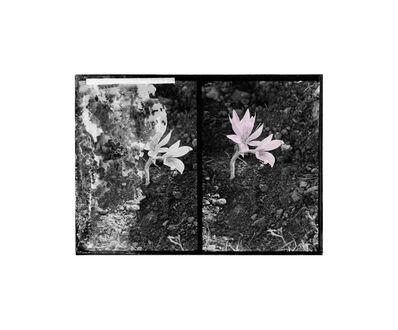 Uriel Orlow, 'Double Vision (Native Plants)', 2013-2015