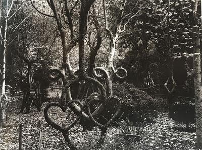 Judy Dater, 'Double Heart Tree', 1975
