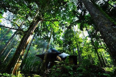 Eka Fendiaspara, 'Pahmung Krui Damar Forest', 2010