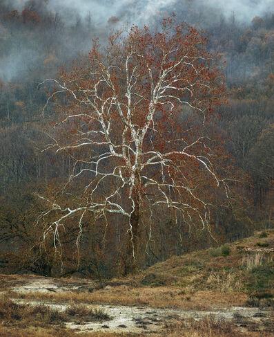 Simen Johan, 'Untitled #177', 2013