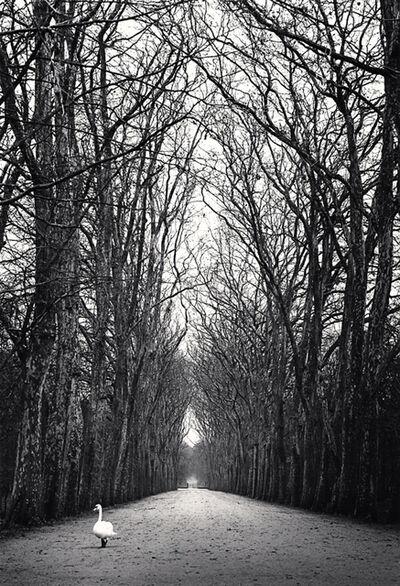 Michael Kenna, 'Strolling Swan, Chateau d'Azay le Rideau, France', 1980