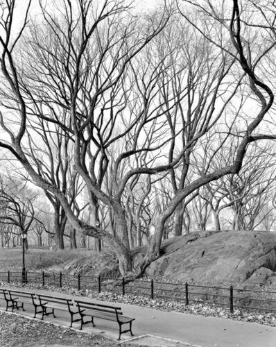 Mitch Epstein, 'American Elm, Central Park, New York ', 2012