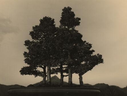 Yamamoto Masao, '#4015', N/A