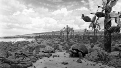Hiroshi Sugimoto, 'Galapagos', 1980