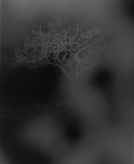 Kazuna Taguchi, 'It is at it is', 2009