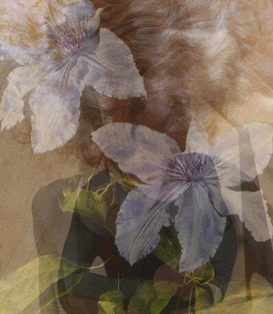 Melanie Willhide, 'Virgin's Bower', 2014