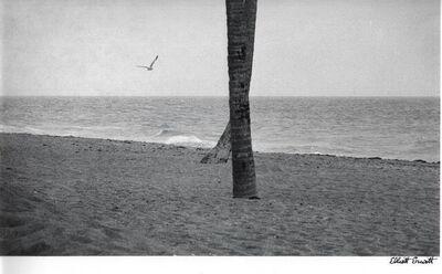Elliott Erwitt, 'Two Palms', 1975