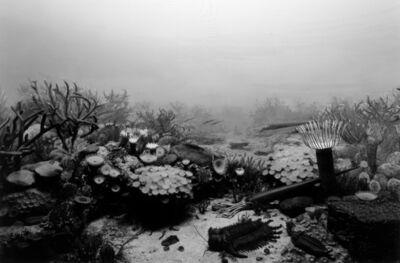 Hiroshi Sugimoto, 'Devonian Period', 1992