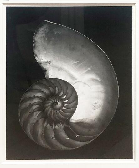 Edward Weston, 'Chambered Nautilus (Shell), 1927-printed later by Cole Weston', 1927