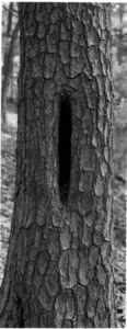 Thaddeus Holownia, 'Tree XVII', 2001