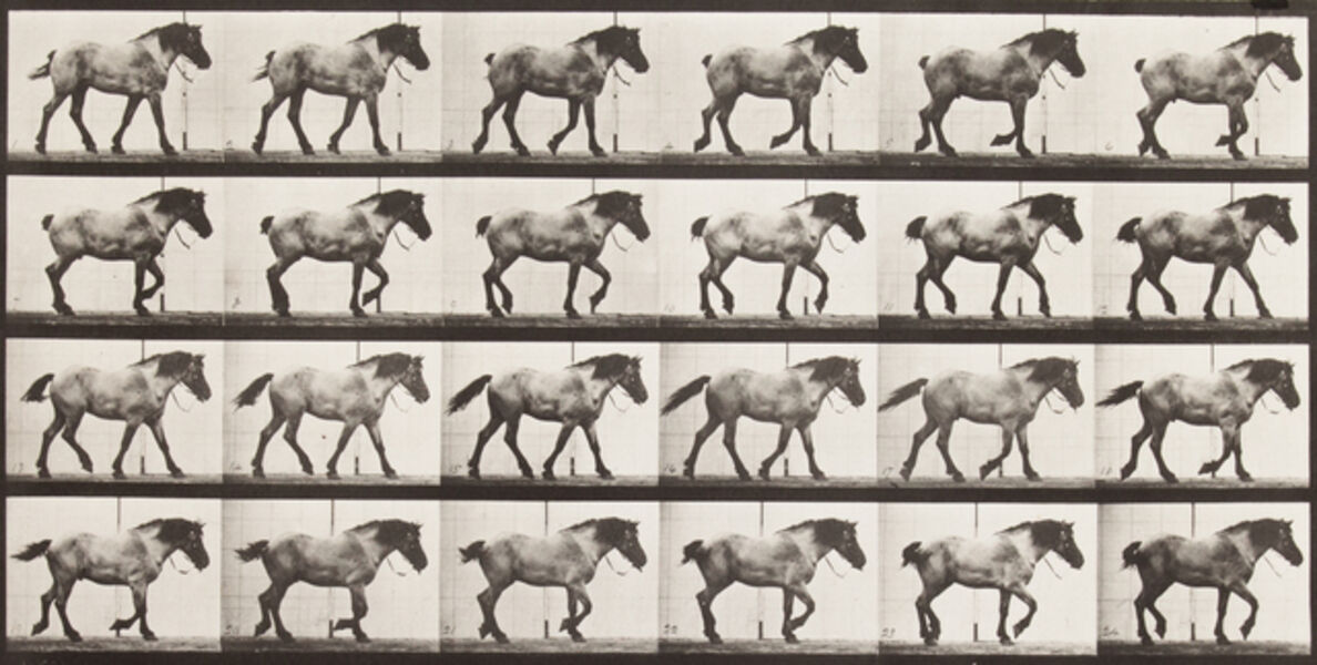 "Eadweard Muybridge, '""Hansel"" walking, free', 1887"