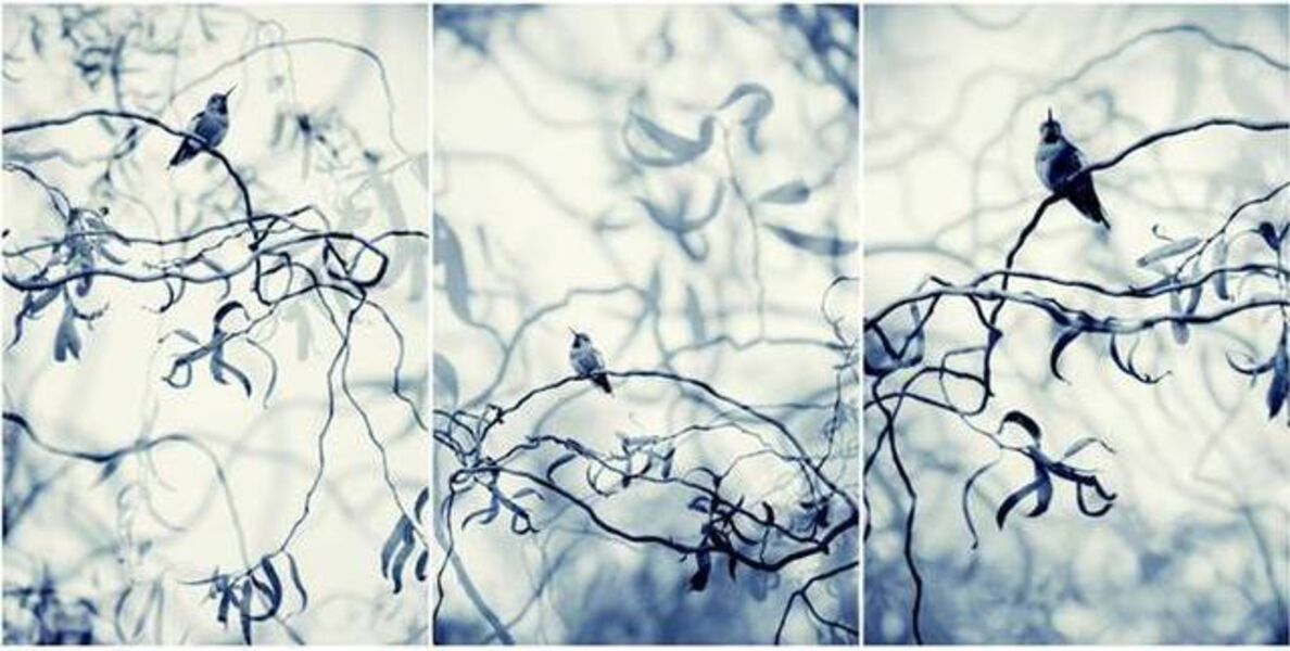 Thea Schrack, 'Blue Willows Triptych', 2010