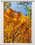 calendar leafs
