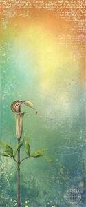 Lynda Lowe, 'Natural Curiosities IV'