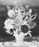 Ambrosius Bosschaert, Bouquet of Flowers on a Ledge, 1619: September 15
