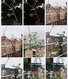 Process (Apple Tree)