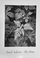 Ansel Adams, 'Ansel Adams, The Print, featuring Leaves, Mt. Rainer National Park, Washington 1942', 1984
