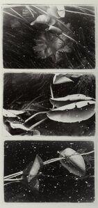 Carol Marino, 'Emerging Lilies (three photographs)', 1997