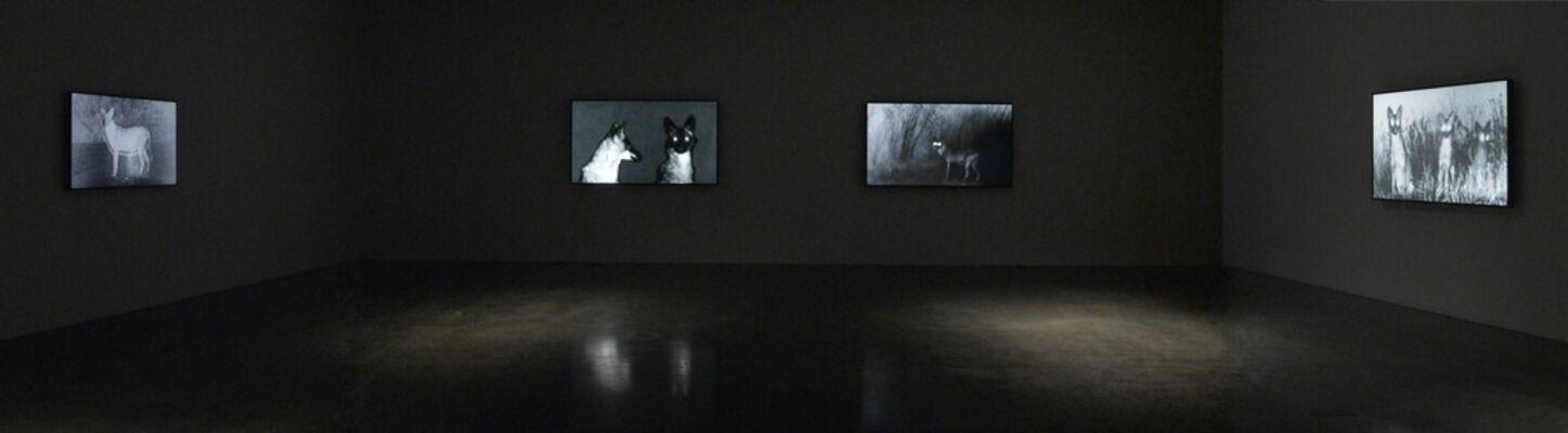 Michal Rovner: Night, installation view