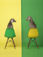 William Wegman, 'Yellow Two Green', 2015