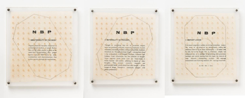 Ricardo Basbaum, 'NBP - Novas Bases para a Personalidade', 1991