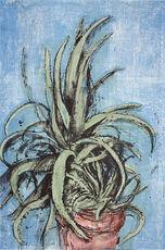 New Mexican Aloe