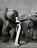 Richard Avedon, 'Dovima with Elephants', 1955