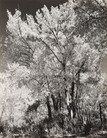 Ansel Adams, 'Autumn, Chama Valley', ca. 1951