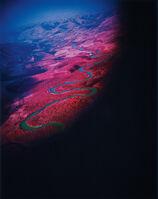 Richard Mosse, 'Another Green World (Infra series)', 2010