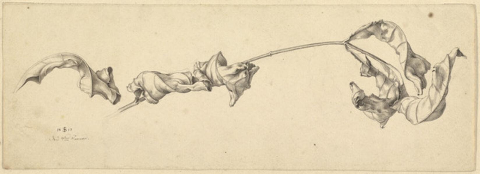 Julius Schnorr von Carolsfeld, 'A Branch with Shriveled Leaves', 1817