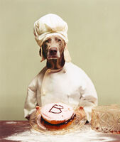 William Wegman, 'B is for Baker', 2020