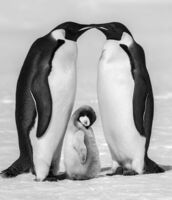 David Yarrow, 'Contentment II'
