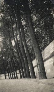 Dora Maar, 'Untitled (Tall Tree Row on street Side)', 1930c