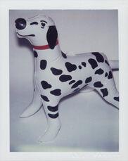 Japanese Toy Dalmatian