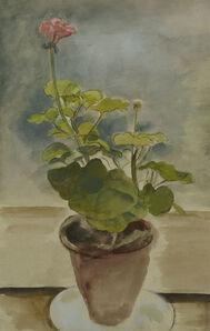 BERNARD MENINSKY, 'Geranium', N.D.