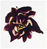 Irving Penn, 'Columbine/Aquilegia vulgaris: William Guiness', 2006