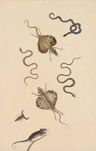 Nicolaas Struyk, 'Flying lizards, snakes, a scorpion and a chameleon', ca. 1719