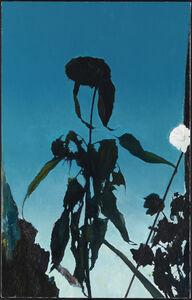 Glenn Sorensen, 'Sunflower', 2013-2014