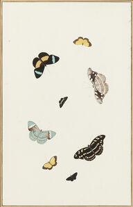 Nicolaas Struyk, 'Butterflies and moths', ca. 1719