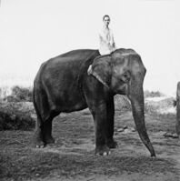 Arthur Elgort, 'Kate Moss on the Elephant, British Vogue', 1993
