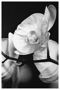 VALENTIN VAN DER MEULEN, 'Orchids 1', 2017