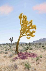 Sarah Anne Johnson, 'Joshua Tree (Yellow Pink)', 2018