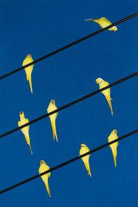 Yoshinori Mizutani, 'Tokyo Parrots 023', 2013