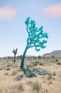 Sarah Anne Johnson, 'Joshua Tree (Teal)', 2018