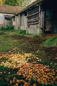Justin Partyka, 'Apples in the Farmyard', 2006