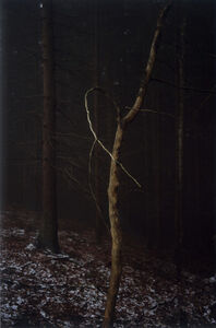 Jitka Hanzlová, '#4 Untitled (Dead Tree Dancing) from FOREST 2000-2005', 2005